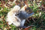 baby squirrrel